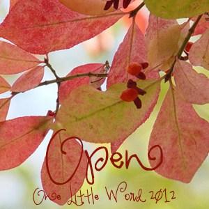 open-olw-300