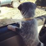 Aretha Road Trip