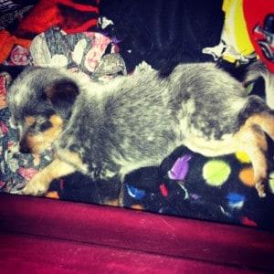 Sleepy Aretha