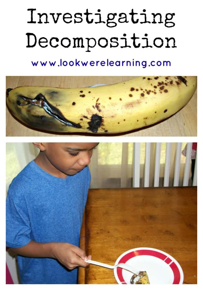 STEM Decomposition of a Banana